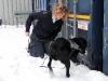 Kathrine med Fleetwood Basil, som er narkohund i Århus